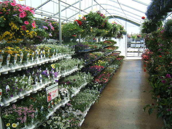 Know What To Grow Sell In 2015 Four Star Greenhouse