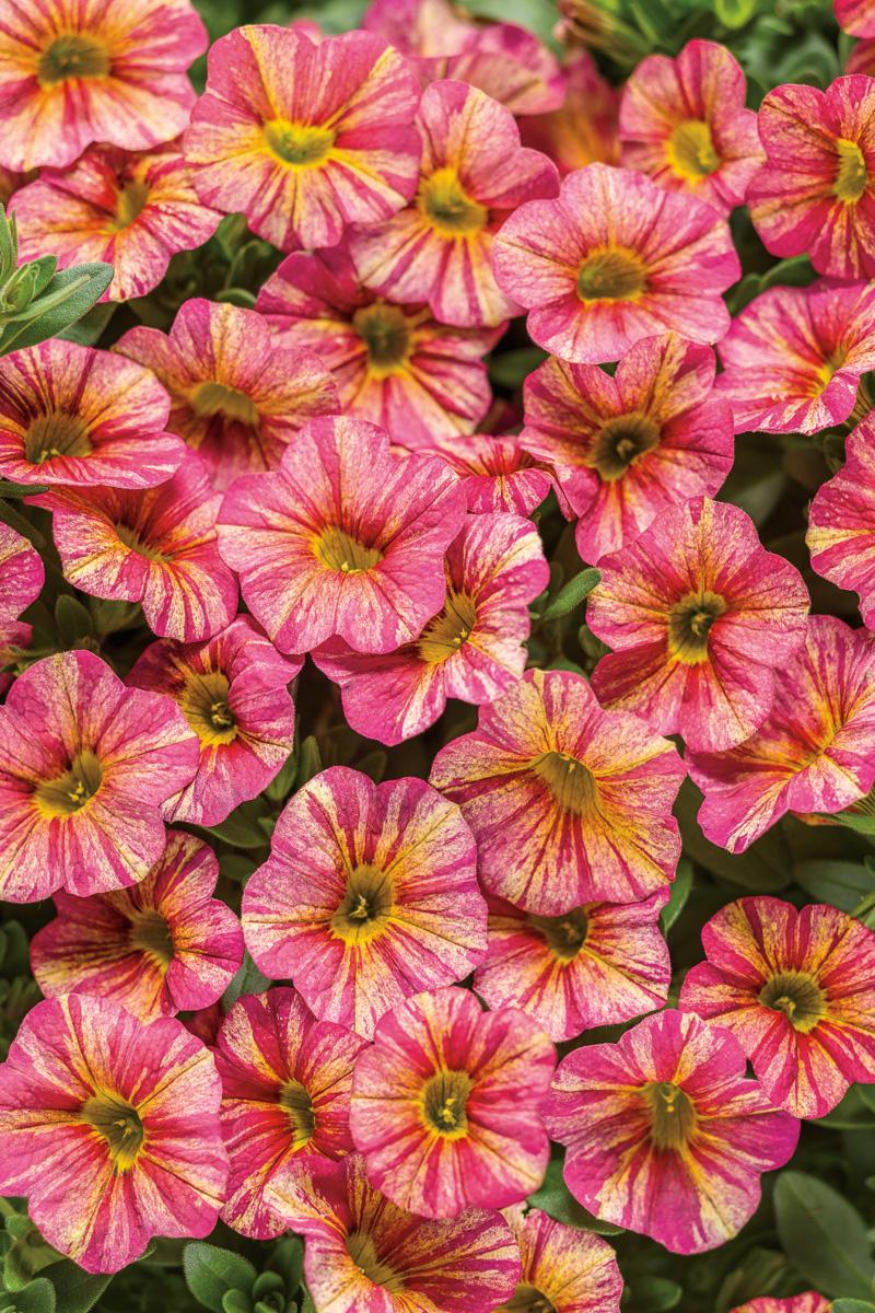 2017 new plants four star greenhouse. Black Bedroom Furniture Sets. Home Design Ideas