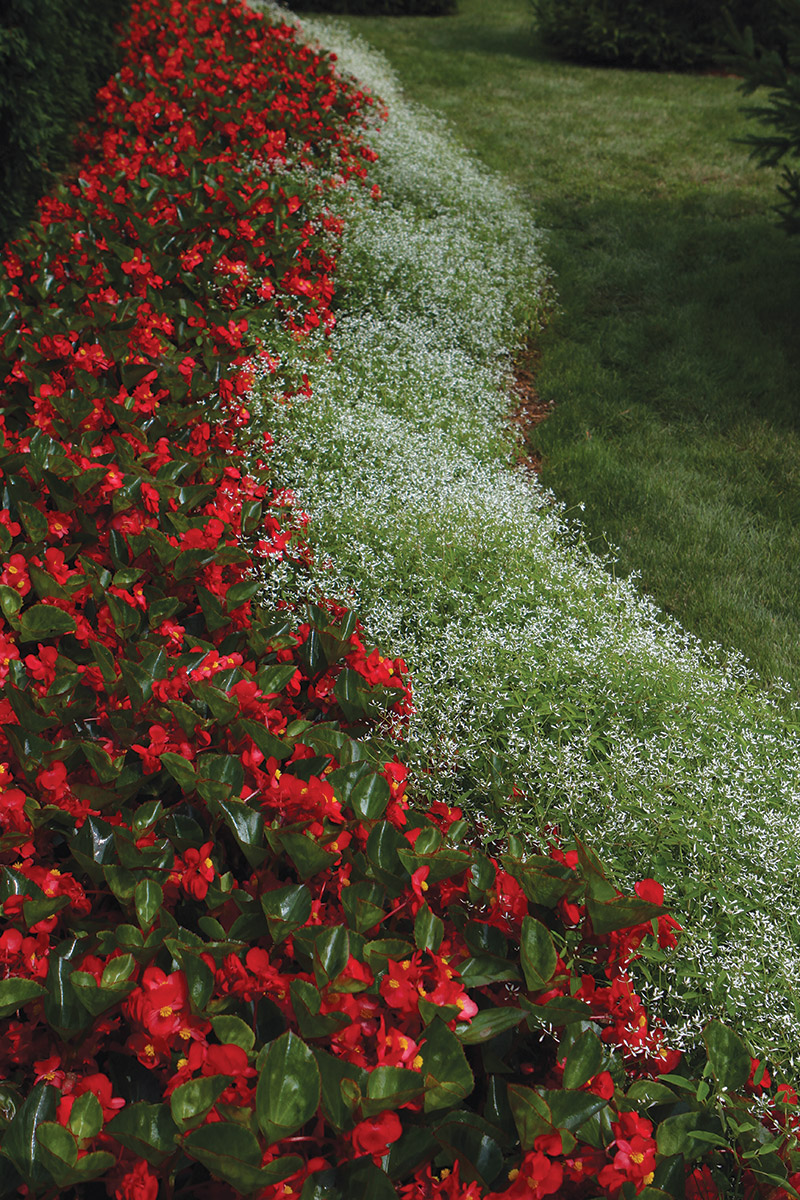 Plant Bed Ideas