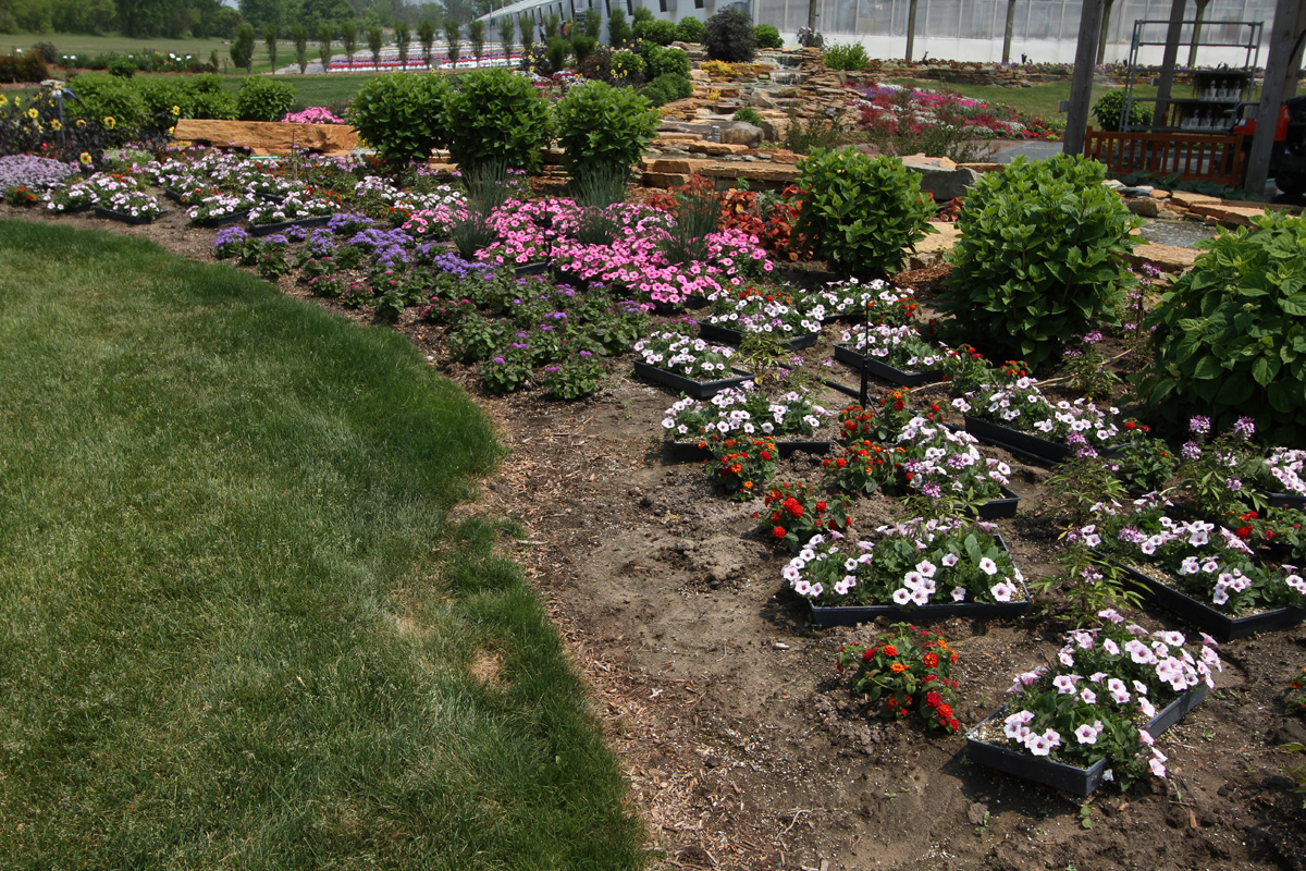 Calculate Plant Spacing Four Star Greenhouse