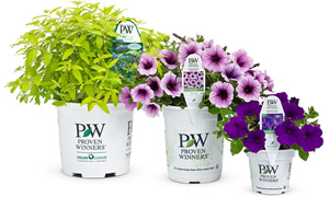 PROVEN WINNERS® - Premium Products for Successful Gardening