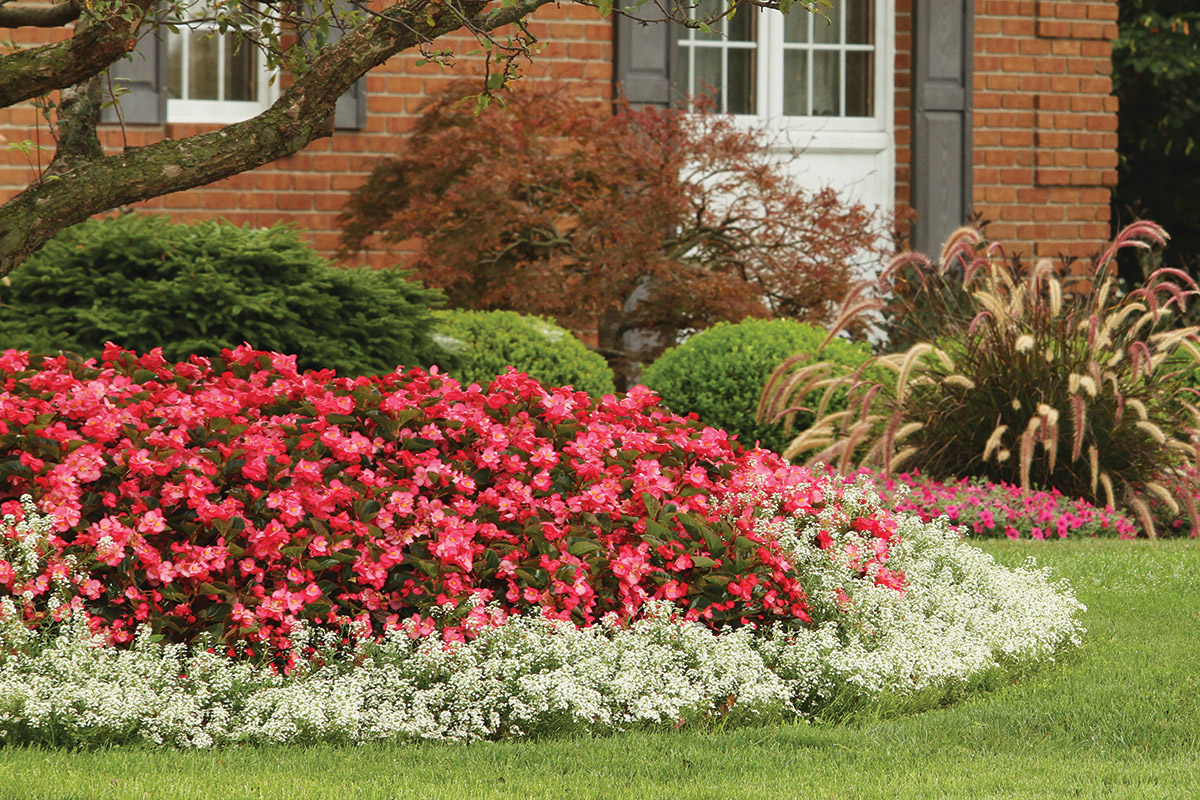 Plant Fertilizers, Soils and Container Irrigation Systems for Gardeners